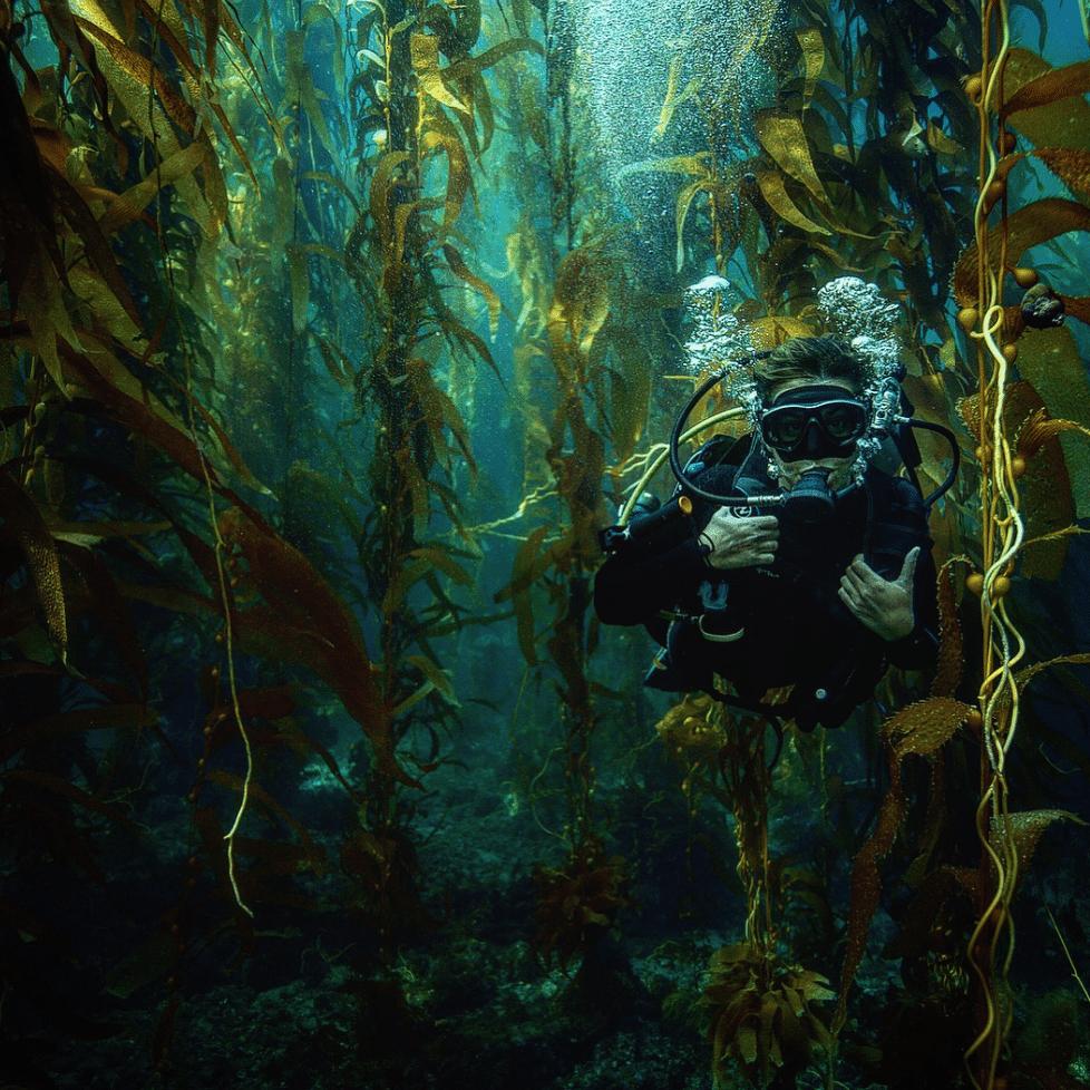 kelp-forest-underwater-photographer