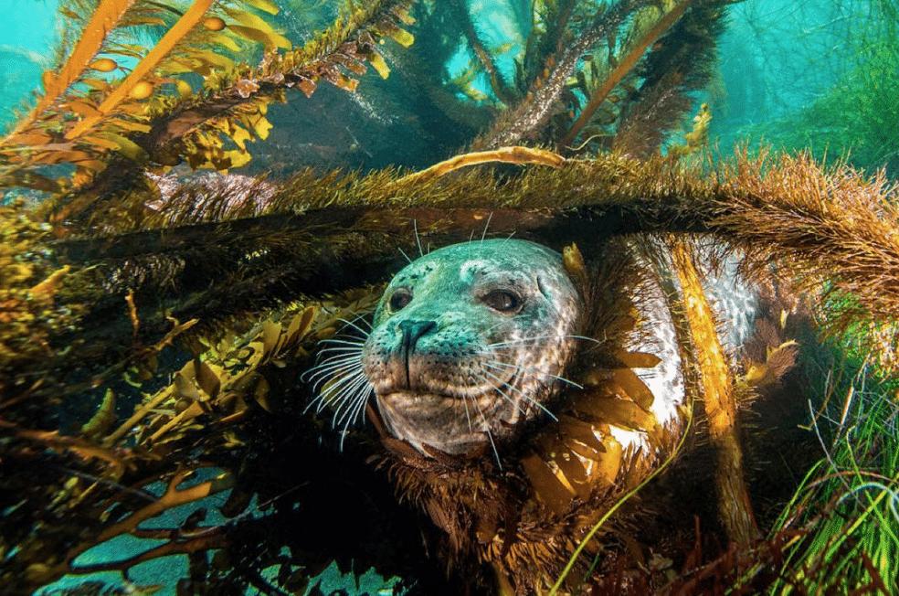 marine-animals-and-sea-life-1
